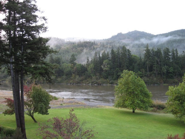 Evergreens and autumn mist on the Rogue River, Oregon. Can you see the little trees in the foreground? Their leaves are changing color, but note the huge expanse of evergreens which provide the backdrop to the deciduous trees.
