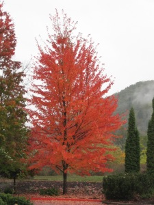 Autumn foliage in Ashland, Oregon